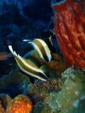 Πλούσιοι Sabah της ομορφιάς της υποβρύχιας ποικιλομορφίας, Μπόρνεο στοκ εικόνες