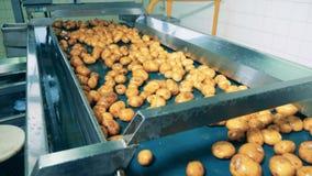 Πλυμένες πατάτες μεταφορών μεταφορέων εργοστασίων σε μια δυνατότητα τροφίμων απόθεμα βίντεο