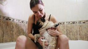 Πλύση σκυλιών μαλαγμένου πηλού Το κορίτσι πλένει την κοιλιά ενός σκυλιού απόθεμα βίντεο