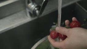 Πλύση Vegatables γυναικών κάτω από το τρεχούμενο νερό απόθεμα βίντεο
