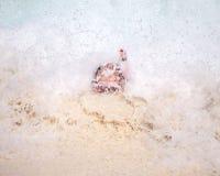 πνίξιμο snorkler Στοκ εικόνα με δικαίωμα ελεύθερης χρήσης