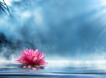 Πνευματικότητα zen με waterlily Στοκ φωτογραφίες με δικαίωμα ελεύθερης χρήσης