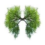 Πνεύμονες Στοκ εικόνα με δικαίωμα ελεύθερης χρήσης