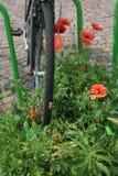 Ποδήλατο και παπαρούνες στοκ εικόνα με δικαίωμα ελεύθερης χρήσης