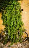 Ποδήλατο, που τρώεται εντελώς από έναν θάμνο, στο χωριό στοκ εικόνα