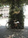 Ποδήλατο πόλεων κάτω από την πράσινη πέργκολα Στοκ Εικόνες