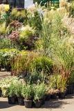 Ποικίλα εγκαταστάσεις και άγρια χορτάρια στην αγορά κήπων, κάθετα στοκ εικόνες με δικαίωμα ελεύθερης χρήσης