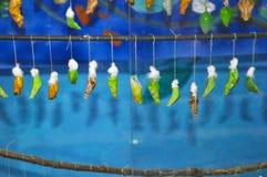 Ποικίλα κουκούλια των πεταλούδων στοκ φωτογραφία με δικαίωμα ελεύθερης χρήσης