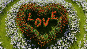 Ποικίλα λουλούδια με μορφή μιας καρδιάς σε έναν πράσινο τομέα, ως σύμβολο της ημέρας και της αγάπης βαλεντίνων ` s ελεύθερη απεικόνιση δικαιώματος