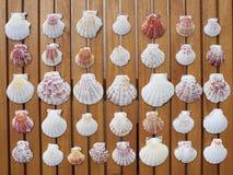 ποικιλία κοχυλιών θάλασ& Στοκ Εικόνα