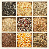 ποικιλία σπόρων σιταριών στοκ φωτογραφίες με δικαίωμα ελεύθερης χρήσης