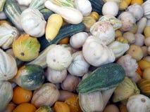 Ποικιλία των λαχανικών στοκ φωτογραφία με δικαίωμα ελεύθερης χρήσης