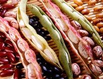 Ποικιλία των ξηρών φασολιών Στοκ φωτογραφία με δικαίωμα ελεύθερης χρήσης