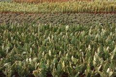 Ποικιλίες κάκτων σε ένα θερμοκήπιο στοκ εικόνες
