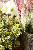 ποικιλίες λουλουδιών Στοκ φωτογραφία με δικαίωμα ελεύθερης χρήσης