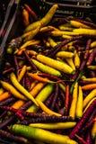 Ποικιλίες των καρότων στην αγορά αγροτών στοκ φωτογραφία με δικαίωμα ελεύθερης χρήσης