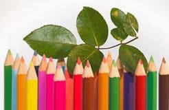 Ποικιλομορφία και ομοιότητα στοκ φωτογραφία με δικαίωμα ελεύθερης χρήσης