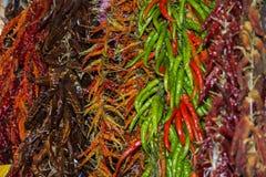 Ποικιλία των ζωηρόχρωμων πιπεριών τσίλι Στοκ Φωτογραφία