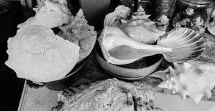 Ποικιλία των θαλασσινών κοχυλιών σε γραπτό Στοκ φωτογραφία με δικαίωμα ελεύθερης χρήσης