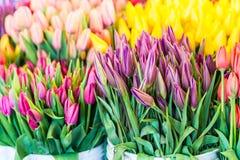 Ποικιλία των λουλουδιών εγκαταστάσεων στην αγορά οδών Στοκ φωτογραφία με δικαίωμα ελεύθερης χρήσης