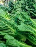 Ποικιλία των πράσινων λαχανικών στην αγορά Στοκ Εικόνες