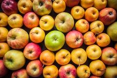 Ποικιλία των φρέσκων ζωηρόχρωμων μήλων Στοκ φωτογραφία με δικαίωμα ελεύθερης χρήσης