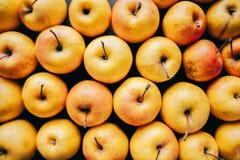 Ποικιλία των φρέσκων ζωηρόχρωμων μήλων Στοκ εικόνα με δικαίωμα ελεύθερης χρήσης