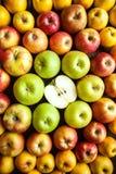 Ποικιλία των φρέσκων ζωηρόχρωμων μήλων Στοκ Φωτογραφίες