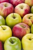 Ποικιλία των φρέσκων μήλων Στοκ Εικόνες