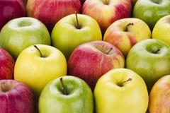 Ποικιλία των φρέσκων μήλων Στοκ Φωτογραφίες