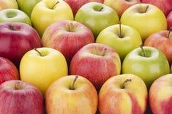 Ποικιλία των φρέσκων μήλων Στοκ εικόνες με δικαίωμα ελεύθερης χρήσης