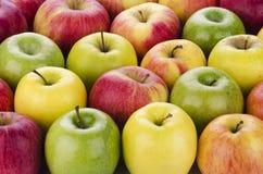 Ποικιλία των φρέσκων μήλων Στοκ εικόνα με δικαίωμα ελεύθερης χρήσης