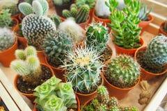 Ποικιλία των Succulent εγκαταστάσεων στοκ φωτογραφίες με δικαίωμα ελεύθερης χρήσης