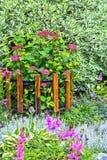 Ποικιλίες δέντρων άνθισης ρόδινες Hydrangea Στοκ Φωτογραφίες