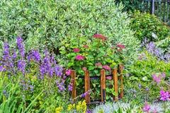 Ποικιλίες δέντρων άνθισης ρόδινες Hydrangea Στοκ Εικόνες