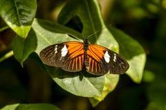 Ποικιλίες πεταλούδων στους βοτανικούς κήπους Στοκ Εικόνες