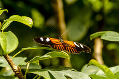 Ποικιλίες πεταλούδων στους βοτανικούς κήπους Στοκ φωτογραφία με δικαίωμα ελεύθερης χρήσης