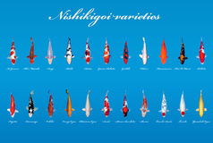 Ποικιλίες Nishikigoi Στοκ φωτογραφία με δικαίωμα ελεύθερης χρήσης