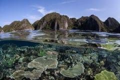 Ποικιλομορφία κοραλλιογενών υφάλων στοκ φωτογραφία με δικαίωμα ελεύθερης χρήσης