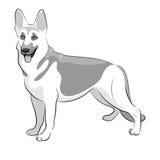 Ποιμένας γερμανικά Μαύρη & άσπρη διανυσματική απεικόνιση σκυλιών Στοκ Εικόνες