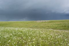 Ποιμένας με τα πρόβατα Το κοπάδι βόσκει στο λόφο πράσινος λόφος Θερινή εποχή στοκ φωτογραφίες