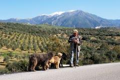 Ποιμένας με τα σκυλιά, Ισπανία. Στοκ Εικόνα