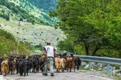 Ποιμένας με τις αίγες που πηγαίνουν στο βουνό στοκ φωτογραφίες με δικαίωμα ελεύθερης χρήσης