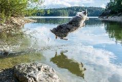 Ποιμένας νερού Στοκ εικόνες με δικαίωμα ελεύθερης χρήσης