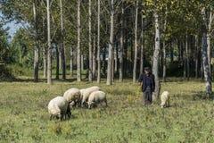 Ποιμένας στο δάσος σε Vore, Αλβανία Στοκ Εικόνες