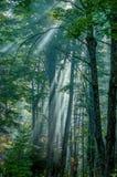 Ποιμενικό δάσος Στοκ φωτογραφίες με δικαίωμα ελεύθερης χρήσης