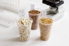 Ποιοτικός έλεγχος τροφίμων στο εργαστήριο κανένας Στοκ φωτογραφία με δικαίωμα ελεύθερης χρήσης