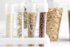 Ποιοτικός έλεγχος τροφίμων στο εργαστήριο κανένας Στοκ εικόνα με δικαίωμα ελεύθερης χρήσης