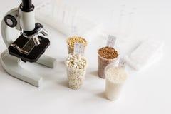 Ποιοτικός έλεγχος τροφίμων στο εργαστήριο κανένας Στοκ εικόνες με δικαίωμα ελεύθερης χρήσης