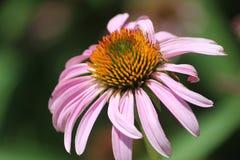 Ποιο λουλούδι Στοκ φωτογραφία με δικαίωμα ελεύθερης χρήσης